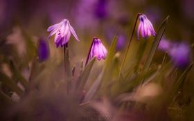 Обои макро, цветы, весна, цветут