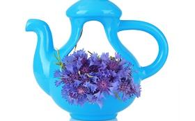Картинка чайник, белый фон, полевые цветы, васильки