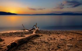 Обои закат, пейзаж, дерево, побережье, море