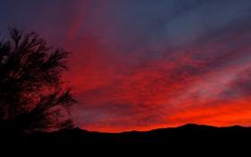 Картинка небо, пейзаж, закат, дерево, силуэт