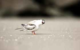 Обои песок, пляж, птица, тень, любопытство, боке