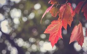 Картинка листья, красные, боке