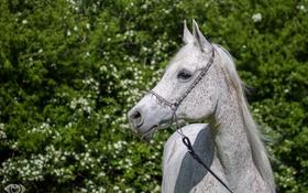 Обои лето, морда, свет, конь, лошадь, грива, грация