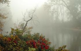 Обои река, осень, туман