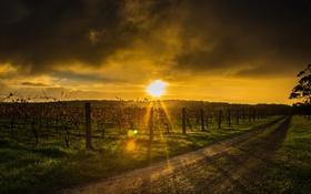 Обои закат, пейзаж, виноград, дорога