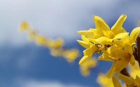 Обои небо, макро, веточка, желтые цветы