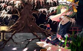 Картинка трава, оружие, девушки, дерево, шляпа, аниме, сакура