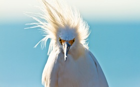 Обои птица, клюв, ветер, перья