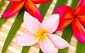 Обои leaves, delicate flowers, нежные цветочки, цветы, flowers, листики