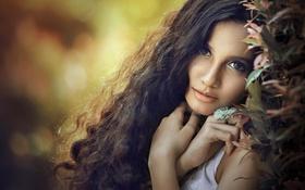 Обои листья, ветки, девушка, брюнетка, взгляд, локоны