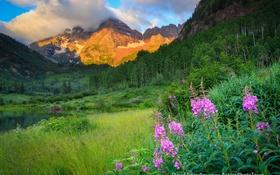 Обои цветы, озеро, горы, природа