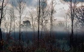 Обои небо, облака, деревья, туман, ветви