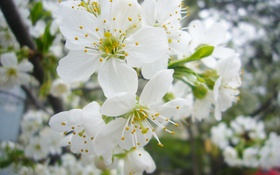 Картинка весна, Деревья, цветение