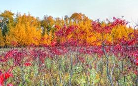 Обои кусты, ветки, деревья, листья, небо, осень