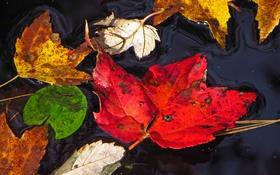 Картинка осень, листья, вода, макро