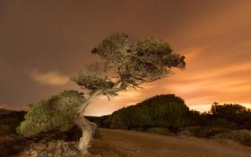 Картинка дорога, небо, звезды, облака, свет, дерево
