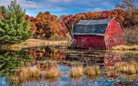 Обои озеро, зеркало, отражение, солнечный, деревья, сарай, отказались