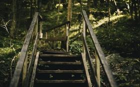 Обои ступени, лестница, природа