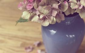 Обои цветы, лепестки, ваза