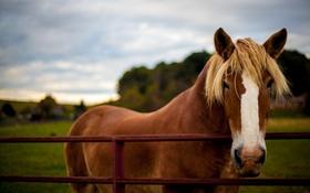 Обои конь, природа, лето