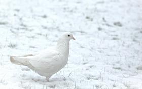 Картинка зима, снег, птица