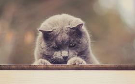 Картинка кот, кошак, котяра, подглядывает