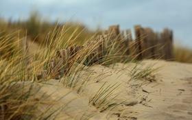 Обои песок, пляж, трава