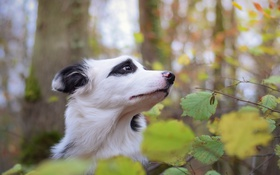 Обои взгляд, природа, друг, собака