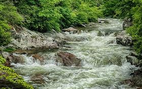 Обои зелень, вода, река, камни, заросли, поток, речка