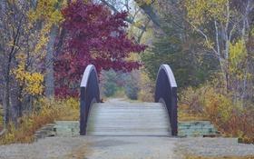 Обои природа, мостик, осень, парк, деревья