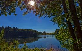 Картинка ветки, солнце, зелень, озеро, кусты, деревья, Германия