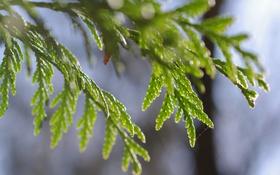 Обои макро, ветки, зеленый, растение