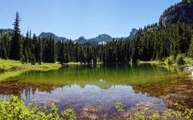 Обои США, лес, река, Crystal River, деревья, Colorado, горы