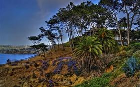 Обои скалы, небо, агава, залив, деревья, La Jolla, California