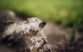 Обои бабочка, камень, крылья, насекомое