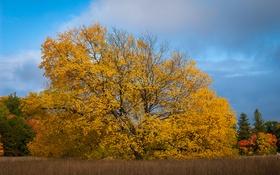 Обои поле, осень, трава, дерево
