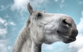 Обои небо, облака, лицо, лошадь