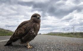 Картинка дорога, фон, птица