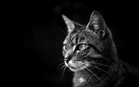 Обои глаза, кот, взгляд, кошак