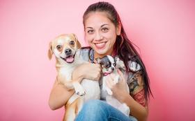 Обои девушка, собаки, настроение
