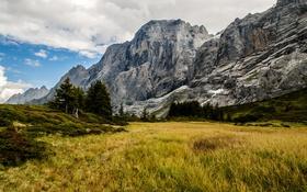 Обои трава, поле, горы, скалы, Grindelwald, Швейцария