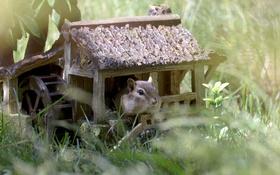 Картинка природа, домик, chipmunks