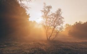 Картинка свет, парк, утро