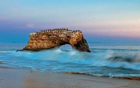Обои арка, море, птицы, волны, Санта-Крус, скала, Калифорния