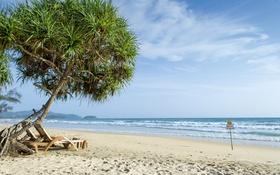 Обои море, волны, пляж, дерево, знак