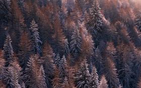 Обои природа, лес, снег, зима, деревья