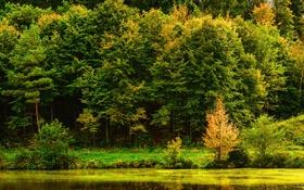 Обои река, Stuttgart, вода, берег, деревья, Германия, отражение