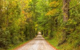 Обои дорога, осень, лес, листья, деревья, листва, солнечные лучи