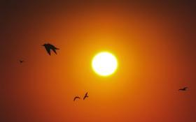 Картинка птицы, солнечный, оранжевое небо