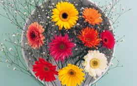 Обои цветы, лепестки, тарелка, натюрморт